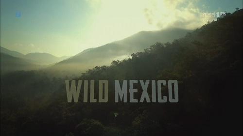Dziki Meksyk / Wild Mexico (2017) PL.1080i.HDTV.h264-HcI   Lektor PL